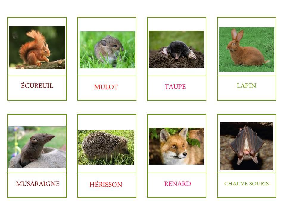 Les animaux du jardin l 39 apprenti sage - Les animaux du jardin ...