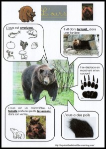 l-ours