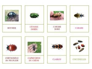 coléoptères1