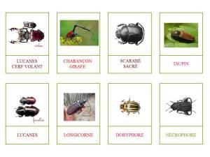 coléoptères2