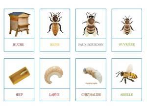 abeilles à imprimer1
