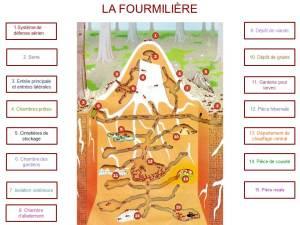 Fourmilière123