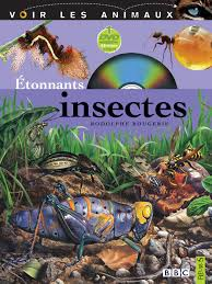insecte4